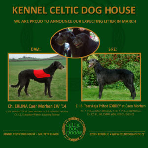 celtic-dog-house-black